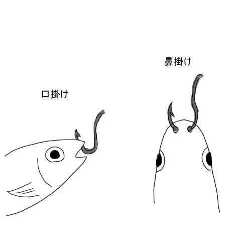 泳がせ 釣り イワシ