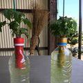 ペットボトルで作る水耕栽培!始める前に気をつけたい3つのポイント!