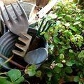 ゼニゴケの駆除方法!生態から考える家庭でできる簡単駆除方法をご紹介