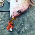 タイラバで釣果をあげる道具選びとおすすめ15選!ロッドやリールなど