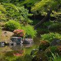 低木で庭を鮮やかに!庭木におすすめな低木9選!和風・洋風別でご紹介