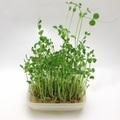 【水耕栽培】室内で簡単に育てられるおすすめの野菜10選をご紹介!