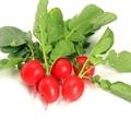 はつか大根(二十日大根)の育て方!プランター菜園でできる簡単栽培方法!