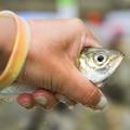 ふれーゆ裏の釣り情報!釣果や釣れるポイント、気になる駐車場もご紹介!