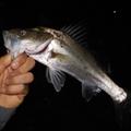 富津新港の釣り情報まとめ!気になる釣り場情報から釣果・狙い方をご紹介!