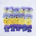 押し花の作り方まとめ!簡単で色あせないやり方で綺麗な押し花を作ろう!