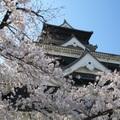 熊本県でしか買えない人気のお土産おすすめ20選!これは買うしかない!
