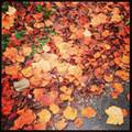 集めた落ち葉は再利用できる!上手な集め方&再利用での腐葉土の作り方!