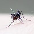 蚊を撃退せよ!絶対に刺されないための対策、最強グッズをご紹介!