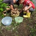 関東の芋掘り体験ができるスポット11選!旬の季節や持ち物もご紹介!
