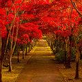 岡山県の紅葉名所&穴場スポット10選!観光におすすめな絶景スポットをご紹介!