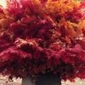 滋賀県で綺麗な紅葉名所&穴場スポットおすすめランキング18!琵琶湖周辺情報も!