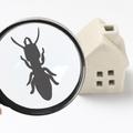白アリの駆除・予防対策は?自分でできる駆除方法から効果のある薬剤を解説!