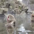 大分のおすすめ温泉12選!有名温泉地巡りでも人気な温泉といえばココ!