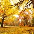 関西で秋に行きたい綺麗な紅葉が楽しめる登山・ハイキングスポット12選!