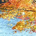 福島で秋に行きたい人気のコテージ・貸別荘おすすめ10選!絶景施設はココ!