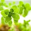 観葉植物おすすめ13選!室内でも育てやすい丈夫な初心者向け植物をご紹介!
