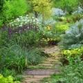 シェードガーデンの作り方は?日陰の庭でも育つ植物や花壇の作り方をご紹介!