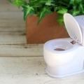 トイレに飾る観葉植物は?おすすめの植物5選&おしゃれな飾り方をご紹介!