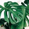 風水に良い運気を上げる観葉植物おすすめ15選!場所や置く方角含めてご紹介!