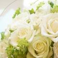 白薔薇の本数別の花言葉は?意味の違いや贈るときの注意点をご紹介!