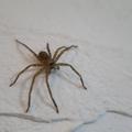 蜘蛛は益虫?害虫?実は害虫を食べてくれる害はない種類もいる!