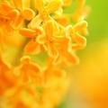 金木犀の香りには秘密の効果がある?成分や効能と遠くまで届く理由を解説!