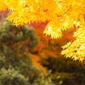 【2019】秋の香川観光の見どころも凄い!秋におすすめのスポット13選!