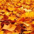 【2019】関西で秋登山で行きたい紅葉が綺麗な山おすすめ13選!ここは絶景!