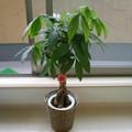 玄関に置く観葉植物おすすめ11選!雰囲気が明るくなる植物を風水を交えてご紹介!