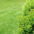 芝生を使った庭づくりで大切な7つのこと!正しい手入れで綺麗な芝生に!