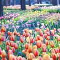 【連載】お花見シーズン到来!春の花がきれいなキャンプ場をご紹介!