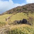 霧降高原のハイキングコース完全ガイド!登山に最適なシーズン・時間は?