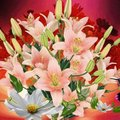 【知らないと恥ずかしい】楽屋花とは?正しい贈り方やマナーを紹介!