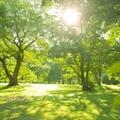 【2020】鹿児島のおすすめピクニックスポット13選!芝生のある人気の公園も!