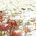 巾着田バーベキュー場の9つの魅力!入場無料で夏も冬も大満足できるのはココだけ!