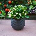 玄関に飾るのに最適な人気観葉植物11選!簡単お手入れで初心者が育てやすいのはコレ!