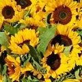 【連載】7月が旬の花はこれ!今お花屋さんで買えるお花を花屋目線で紹介!
