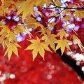 【2020】愛知県の紅葉スポットおすすめベスト13!ウットリ必至の絶景名所はここ!