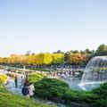 【2020】国営昭和記念公園の紅葉特集!デートにぴったりの見どころを一挙ご紹介!