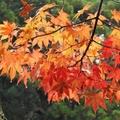 【2020】飛騨高山の紅葉スポットおすすめ13選!見どころ満載の名所はココだ!