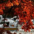 【2020】井の頭公園の紅葉情報!見頃の時期と写真映えする絶景ポイントをご紹介!