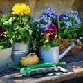 初心者でも簡単なベランダガーデニングの方法を解説!育てやすい植物の種類も!